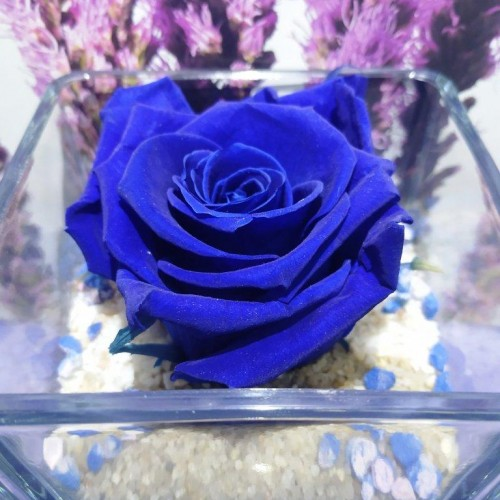 For Ever Roses Blue