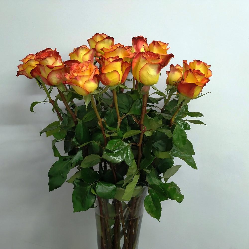 Τριαντάφυλλο κίτρινο πορτοκαλί