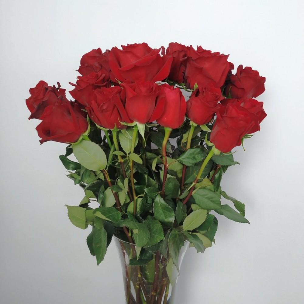 Τριαντάφυλλα κόκκινα Equador