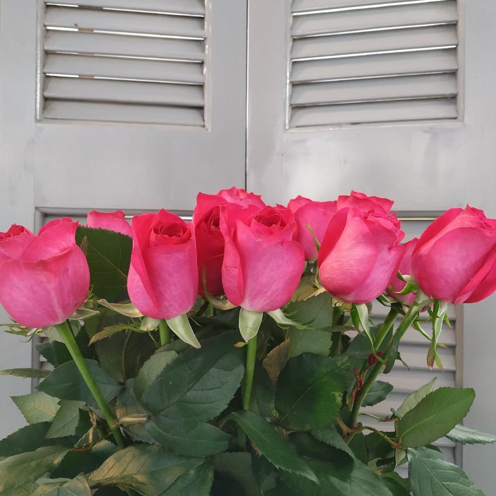 Τριαντάφυλλα Φούξια